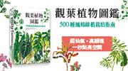 一秒就能點亮空間的超仙氣綠植,一起來種!